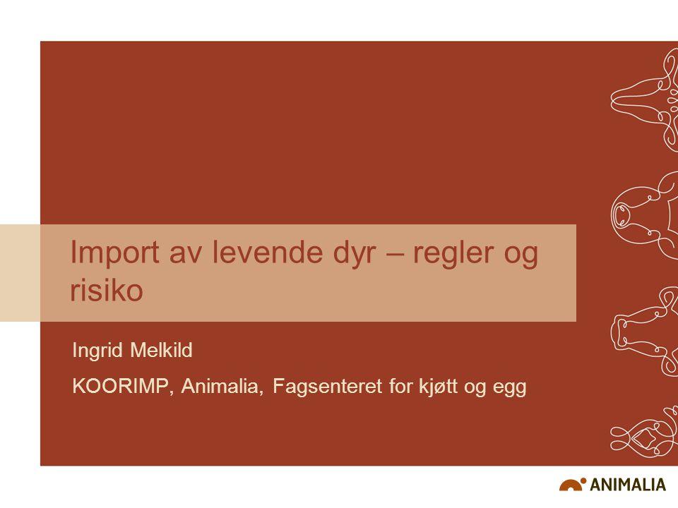 Import av levende dyr – regler og risiko Ingrid Melkild KOORIMP, Animalia, Fagsenteret for kjøtt og egg