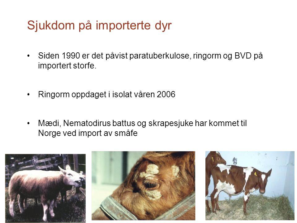 Sjukdom på importerte dyr Siden 1990 er det påvist paratuberkulose, ringorm og BVD på importert storfe. Ringorm oppdaget i isolat våren 2006 Mædi, Nem