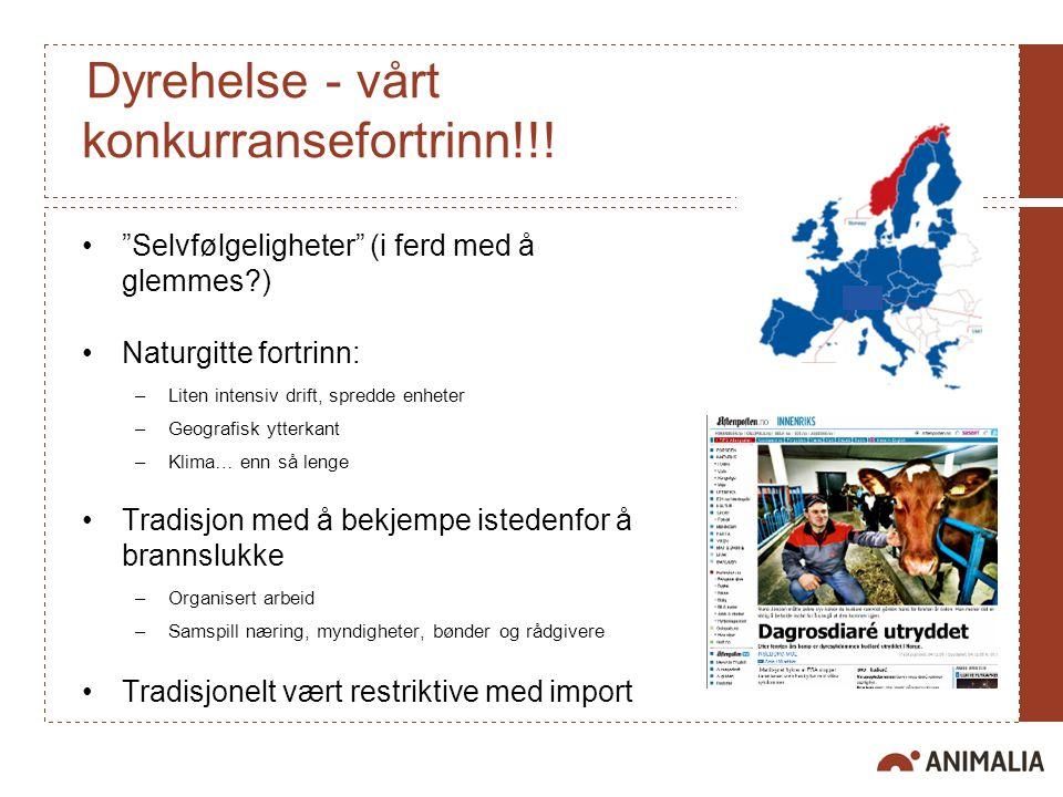 Dyrehelse - vårt konkurransefortrinn!!.