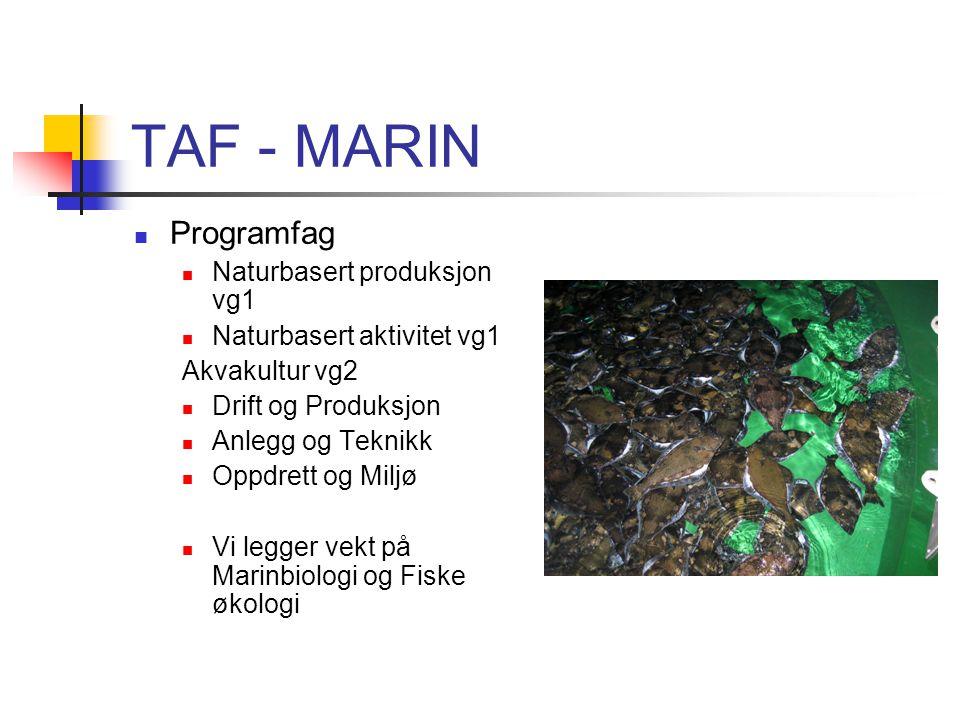 TAF - MARIN Programfag Naturbasert produksjon vg1 Naturbasert aktivitet vg1 Akvakultur vg2 Drift og Produksjon Anlegg og Teknikk Oppdrett og Miljø Vi