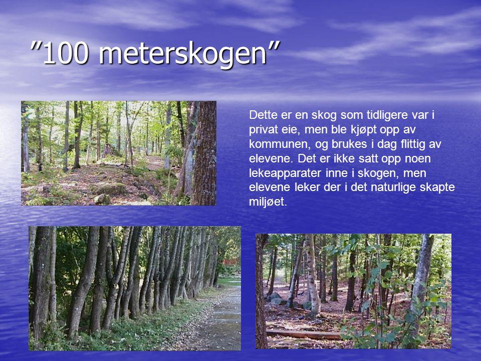 """""""100 meterskogen"""" Dette er en skog som tidligere var i privat eie, men ble kjøpt opp av kommunen, og brukes i dag flittig av elevene. Det er ikke satt"""