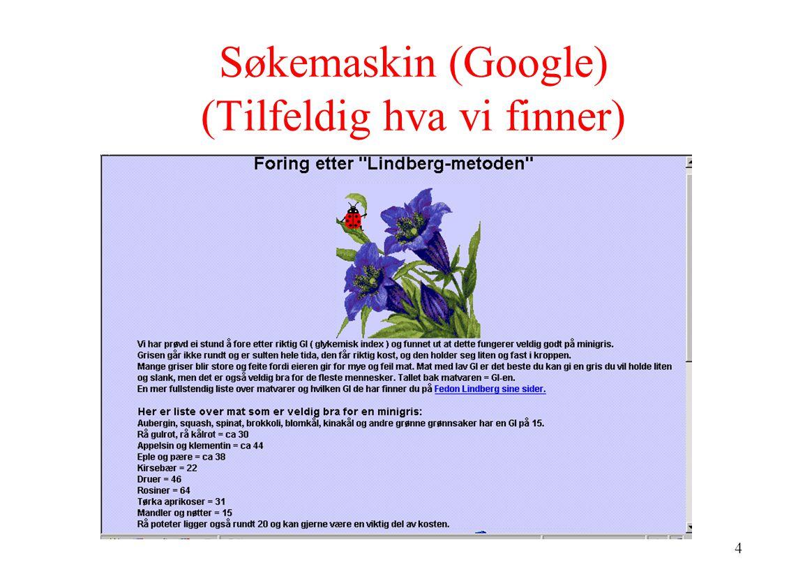 4 Søkemaskin (Google) (Tilfeldig hva vi finner)