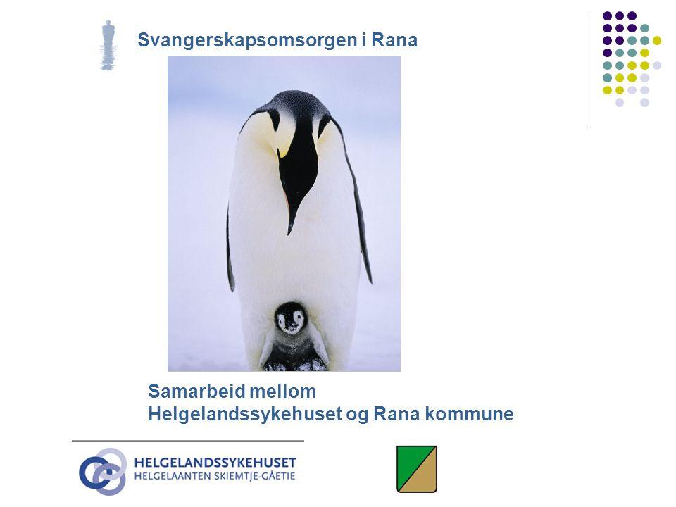 Svangerskapsomsorgen i Rana Samarbeid mellom Helgelandssykehuset og Rana kommune