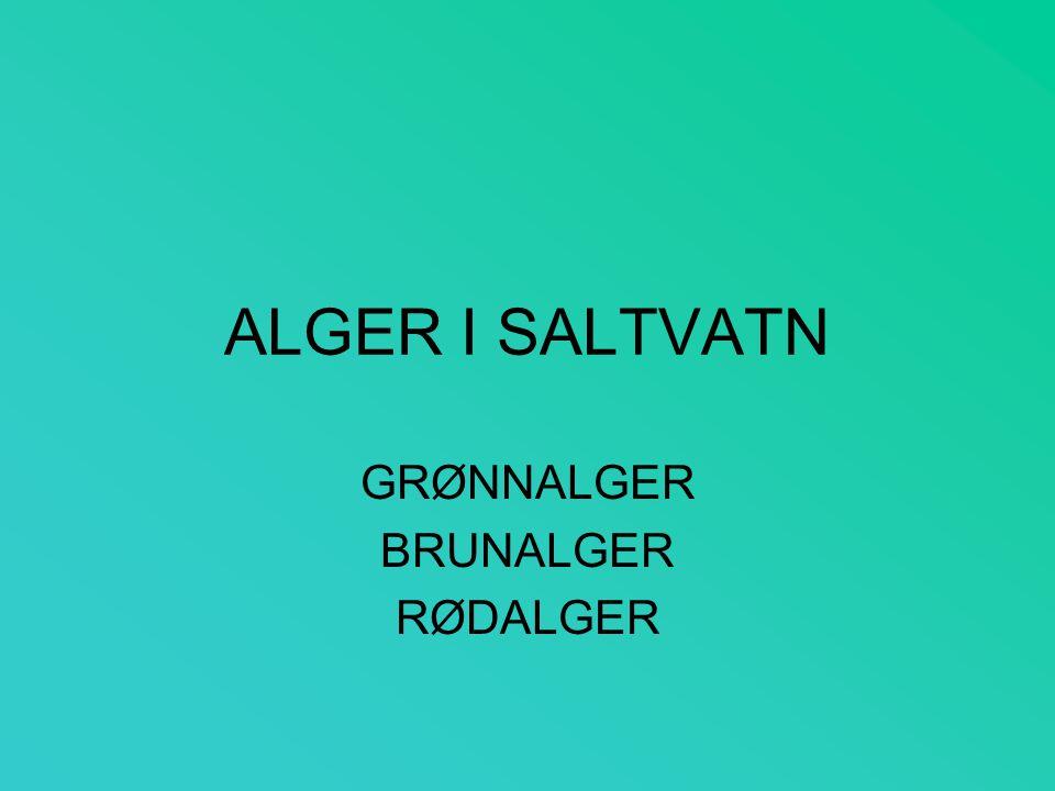 ALGER I SALTVATN GRØNNALGER BRUNALGER RØDALGER
