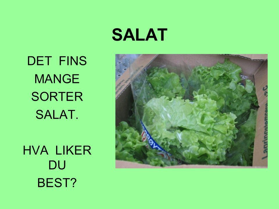SALAT DET FINS MANGE SORTER SALAT. HVA LIKER DU BEST?