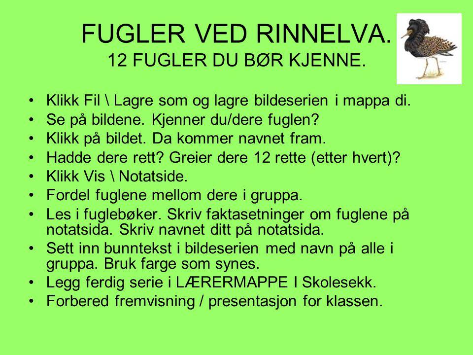 FUGLER VED RINNELVA.12 FUGLER DU BØR KJENNE.