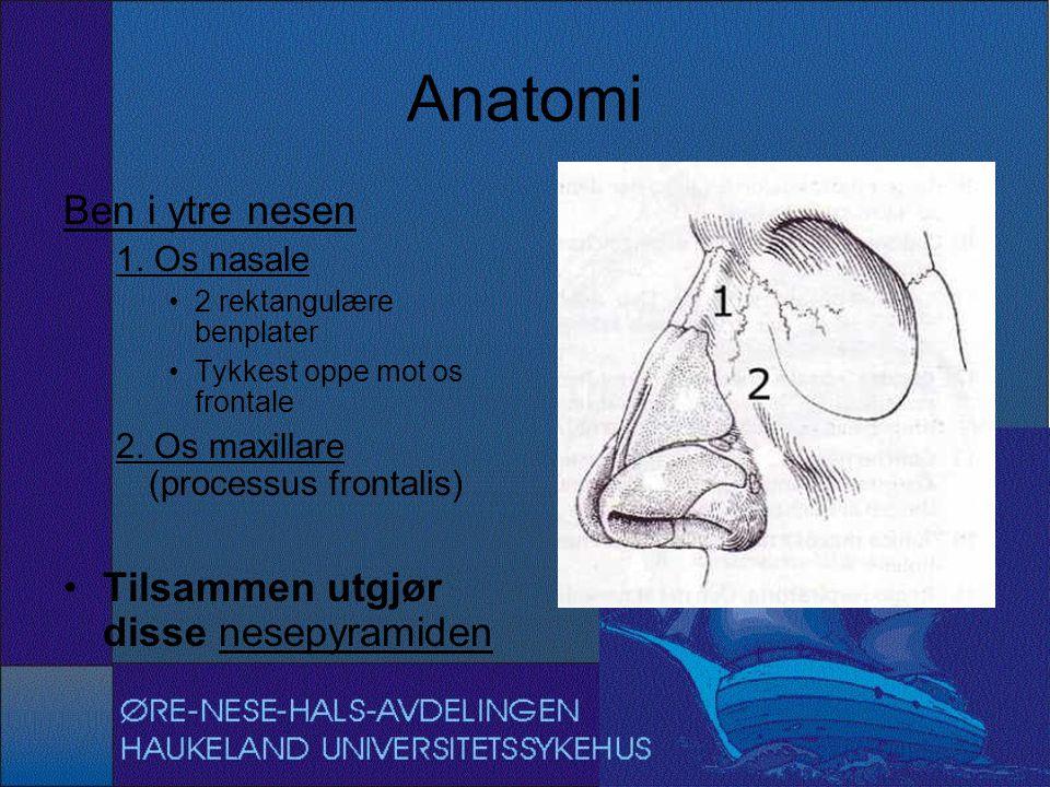 Anatomi Ben i ytre nesen 1. Os nasale 2 rektangulære benplater Tykkest oppe mot os frontale 2. Os maxillare (processus frontalis) Tilsammen utgjør dis