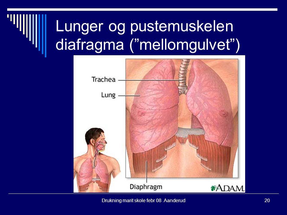 """Drukning marit skole febr 08 Aanderud20 Lunger og pustemuskelen diafragma (""""mellomgulvet"""")"""