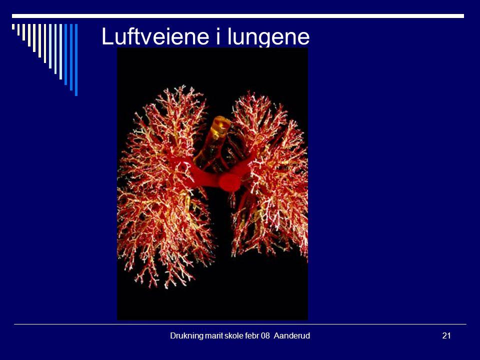 Drukning marit skole febr 08 Aanderud21 Luftveiene i lungene