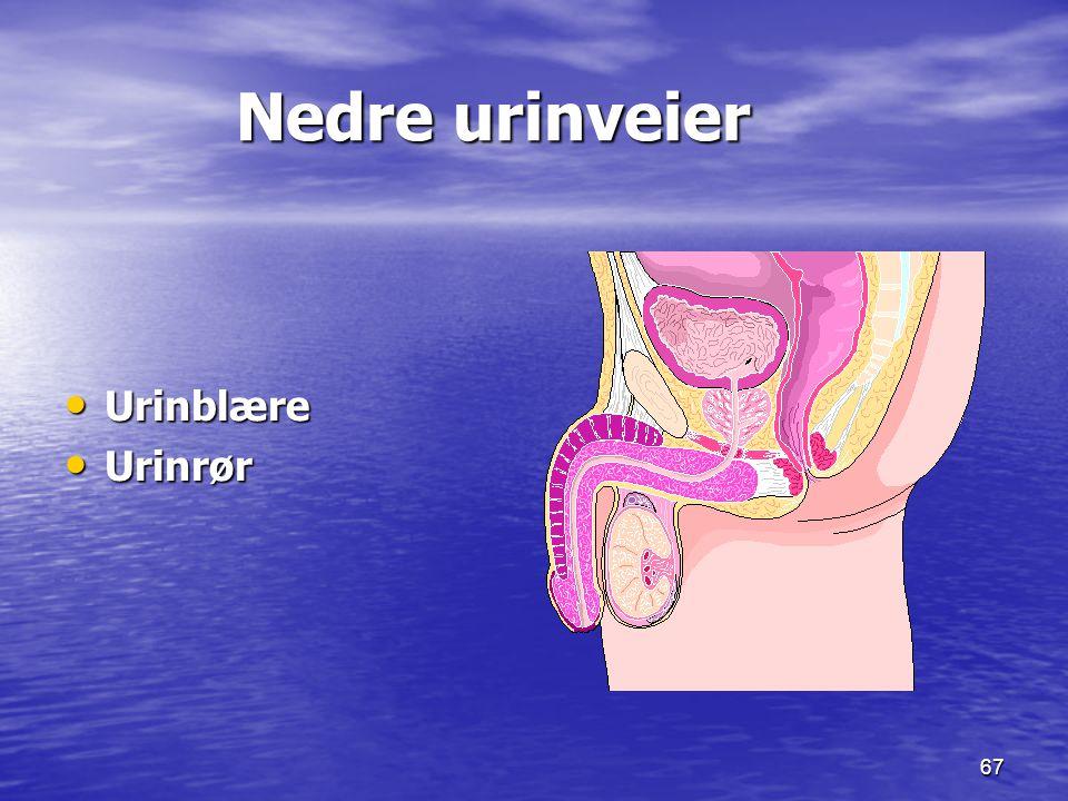 67 Nedre urinveier Nedre urinveier Urinblære Urinblære Urinrør Urinrør