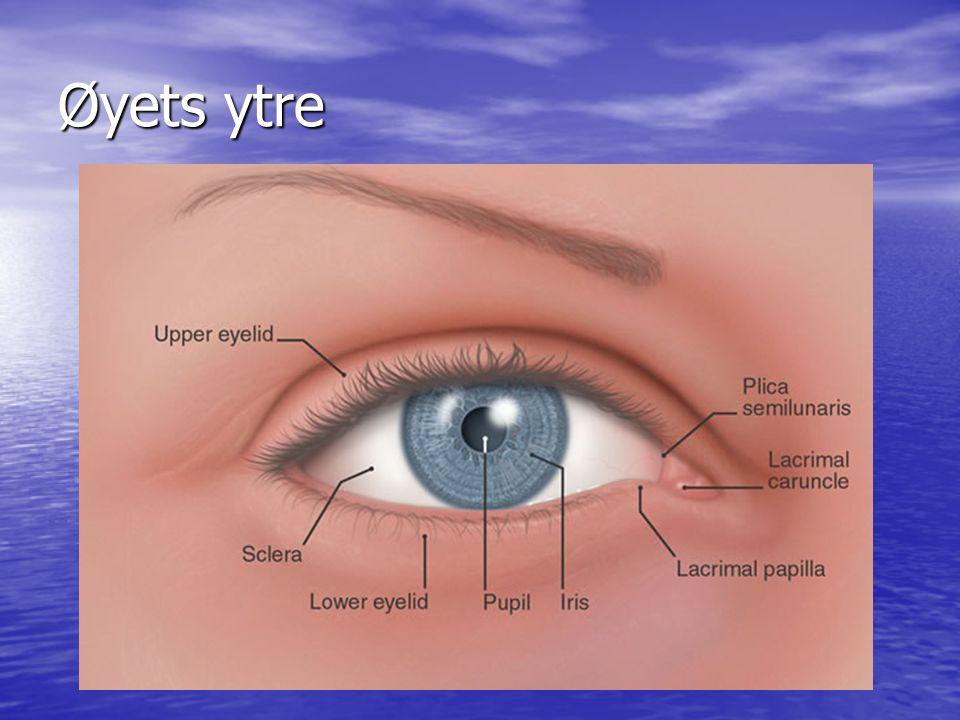Øyets indre 1.Iris = regnbuehinnen 2. Conjunctiva = Bindehinnen 3.