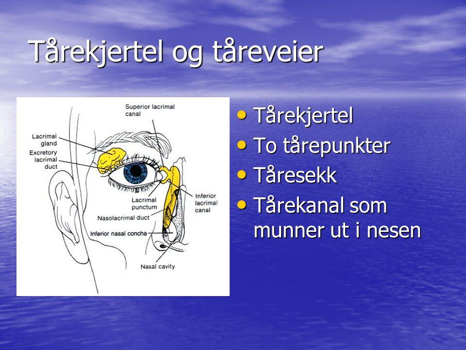 Undersøkelse av øyet Inspeksjon Inspeksjon –Øyelokk, øyelokksrender, tårekanaler.