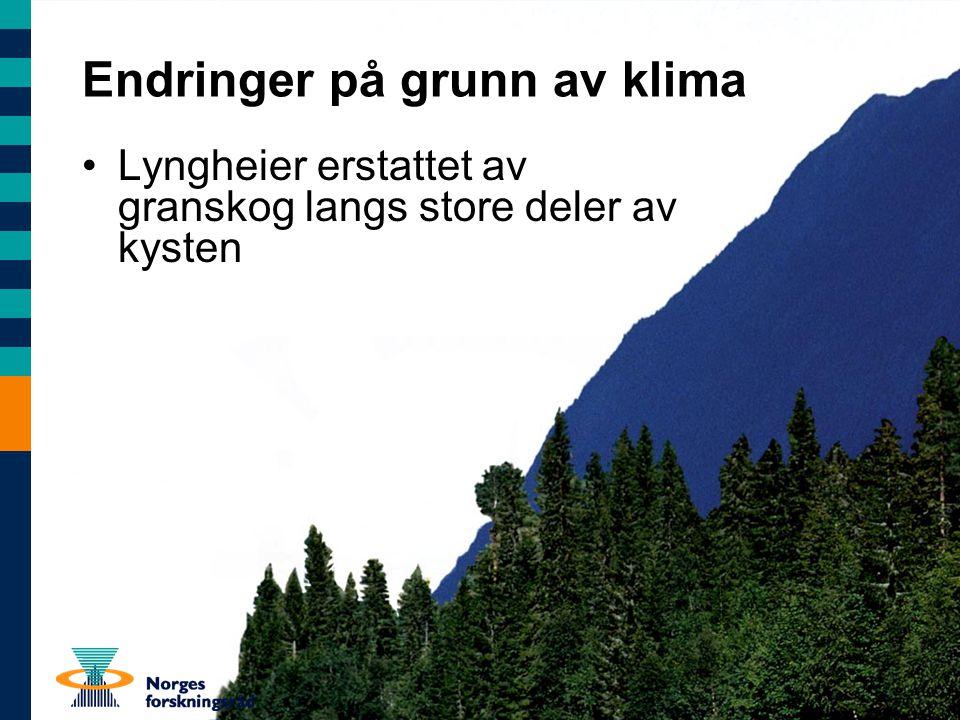 Lyngheier erstattet av granskog langs store deler av kysten