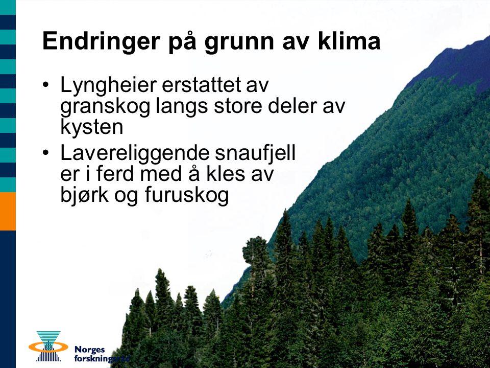Endringer på grunn av klima Lyngheier erstattet av granskog langs store deler av kysten Lavereliggende snaufjell er i ferd med å kles av bjørk og furuskog