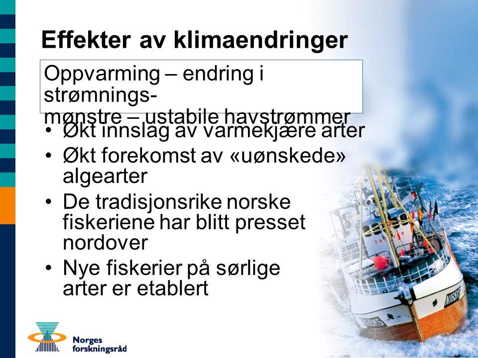 Effekter av klimaendringer Økt innslag av varmekjære arter Økt forekomst av «uønskede» algearter De tradisjonsrike norske fiskeriene har blitt presset nordover Nye fiskerier på sørlige arter er etablert Oppvarming – endring i strømnings- mønstre – ustabile havstrømmer