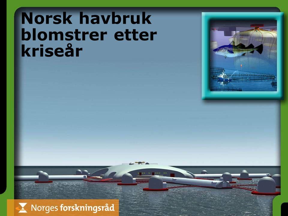 Norsk havbruk blomstrer etter kriseår
