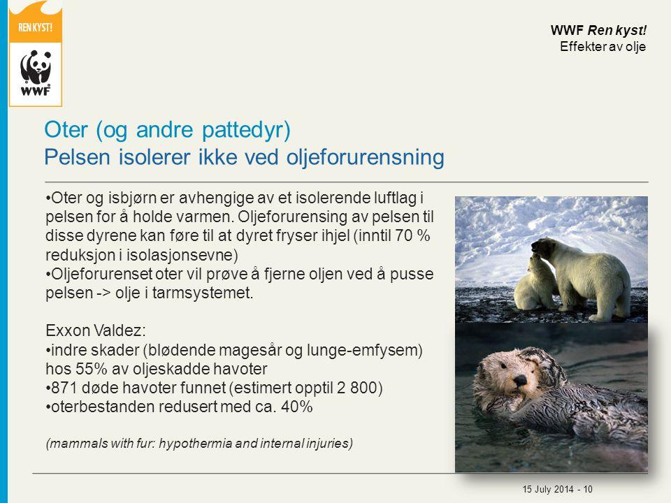 Oter (og andre pattedyr) Pelsen isolerer ikke ved oljeforurensning Oter og isbjørn er avhengige av et isolerende luftlag i pelsen for å holde varmen.