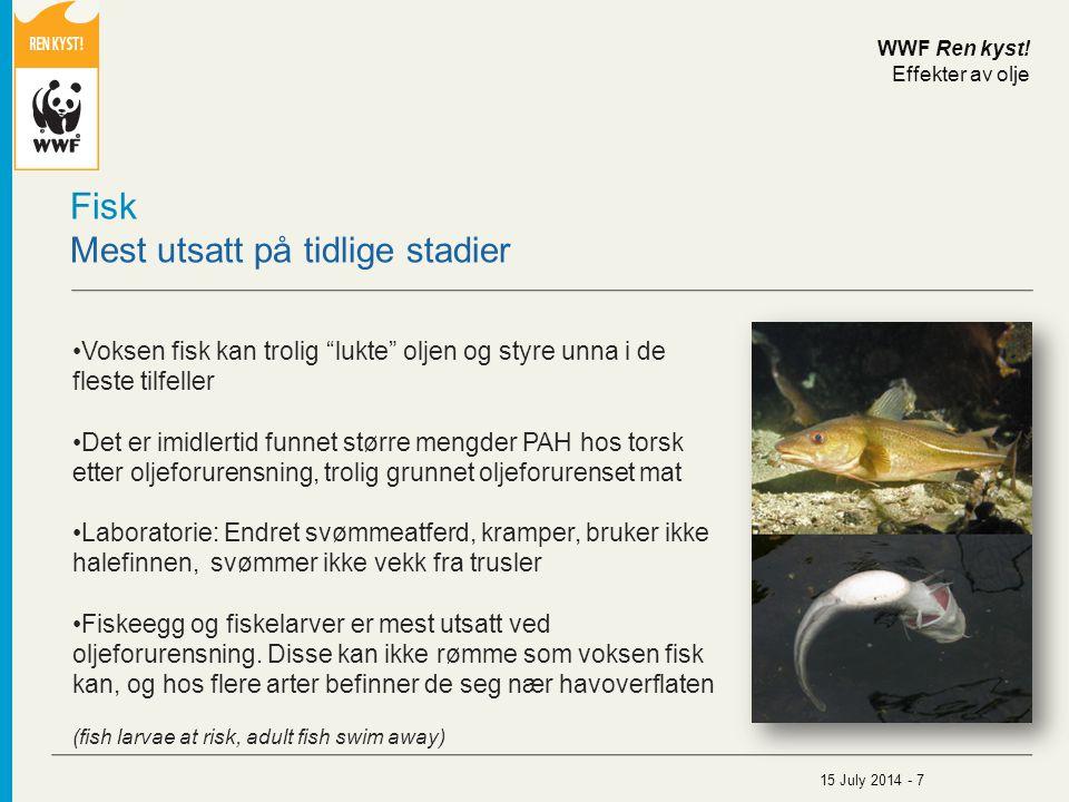 """Fisk Mest utsatt på tidlige stadier Voksen fisk kan trolig """"lukte"""" oljen og styre unna i de fleste tilfeller Det er imidlertid funnet større mengder P"""