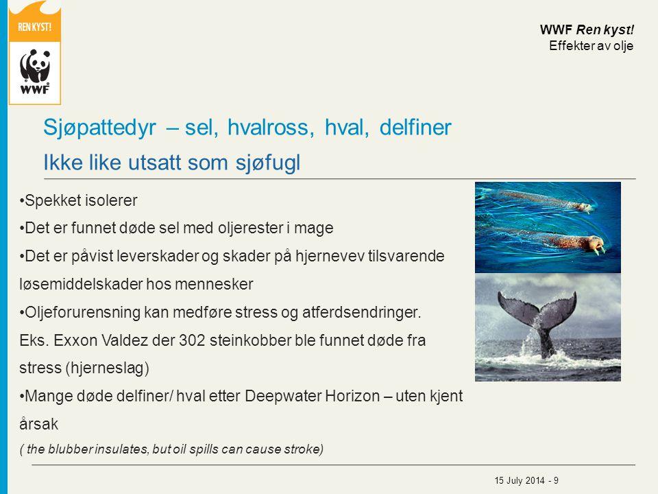 Sjøpattedyr – sel, hvalross, hval, delfiner Spekket isolerer Det er funnet døde sel med oljerester i mage Det er påvist leverskader og skader på hjern