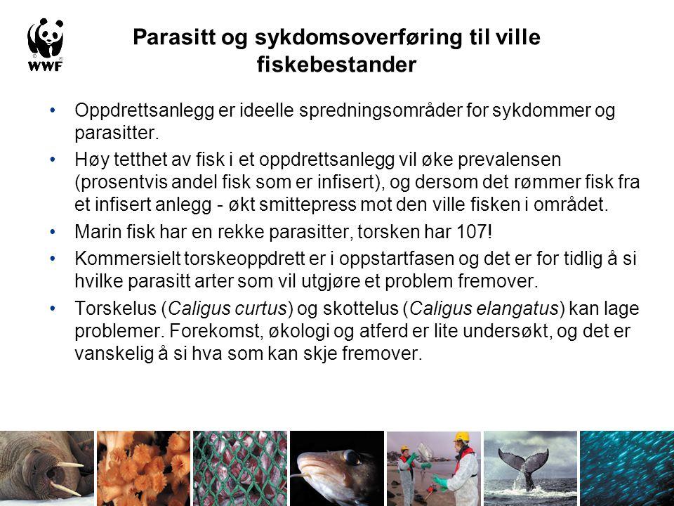 Parasitt og sykdomsoverføring til ville fiskebestander Oppdrettsanlegg er ideelle spredningsområder for sykdommer og parasitter. Høy tetthet av fisk i