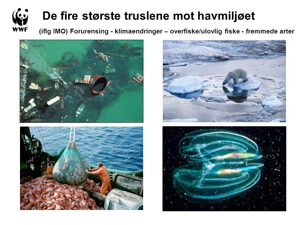 De fire største truslene mot havmiljøet (iflg IMO) Forurensing - klimaendringer – overfiske/ulovlig fiske - fremmede arter