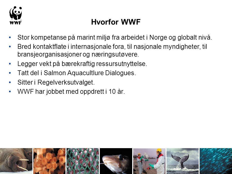 Hvorfor WWF Stor kompetanse på marint miljø fra arbeidet i Norge og globalt nivå. Bred kontaktflate i internasjonale fora, til nasjonale myndigheter,