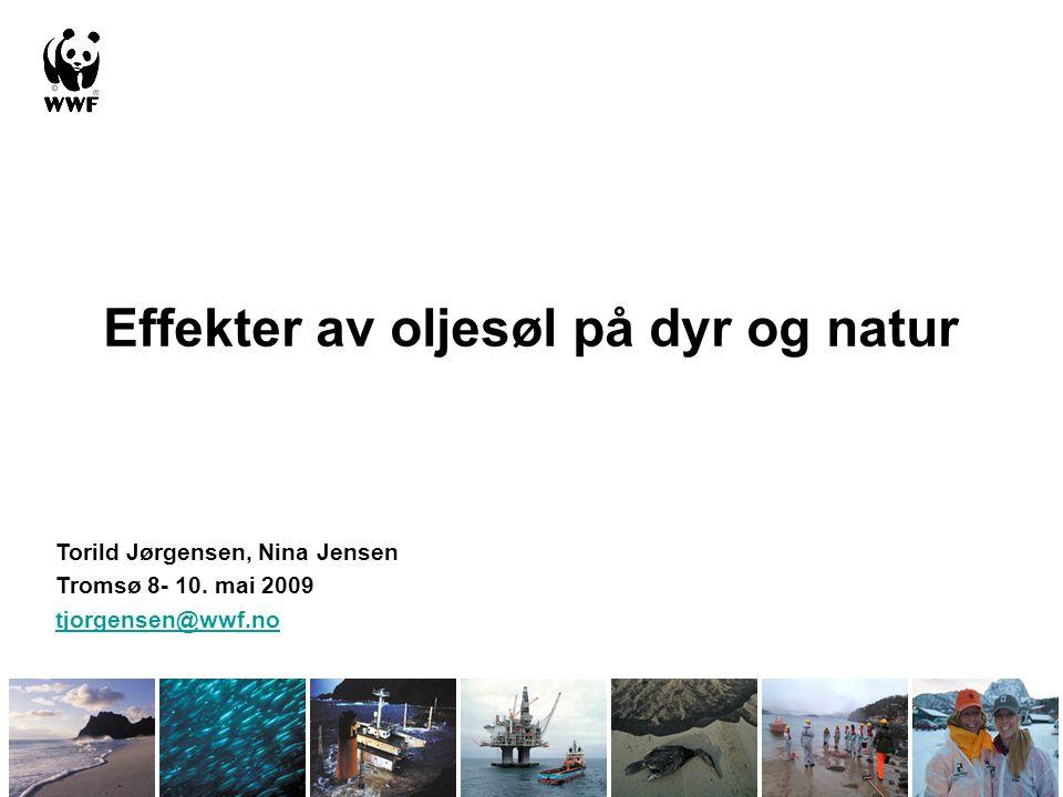 Effekter av oljesøl på dyr og natur Torild Jørgensen, Nina Jensen Tromsø 8- 10. mai 2009 tjorgensen@wwf.no
