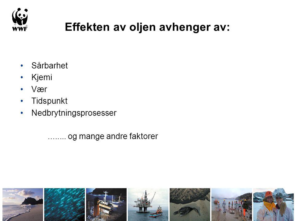 Langtidseffekter av oljeforurensing (Exxon Valdez) Kronisk oljelekkasje (spesielt i de øvre sedimentlagene) Effekter av ikke-dødelig oljeeksponering (dårligere helse, vekst og reproduksjon) Indirekte effekter som følge av høy dødelighet under/etter ulykken Kun 7 av 28 påvirkede bestander har blitt tilbakeført til opprinnelig tilstand.