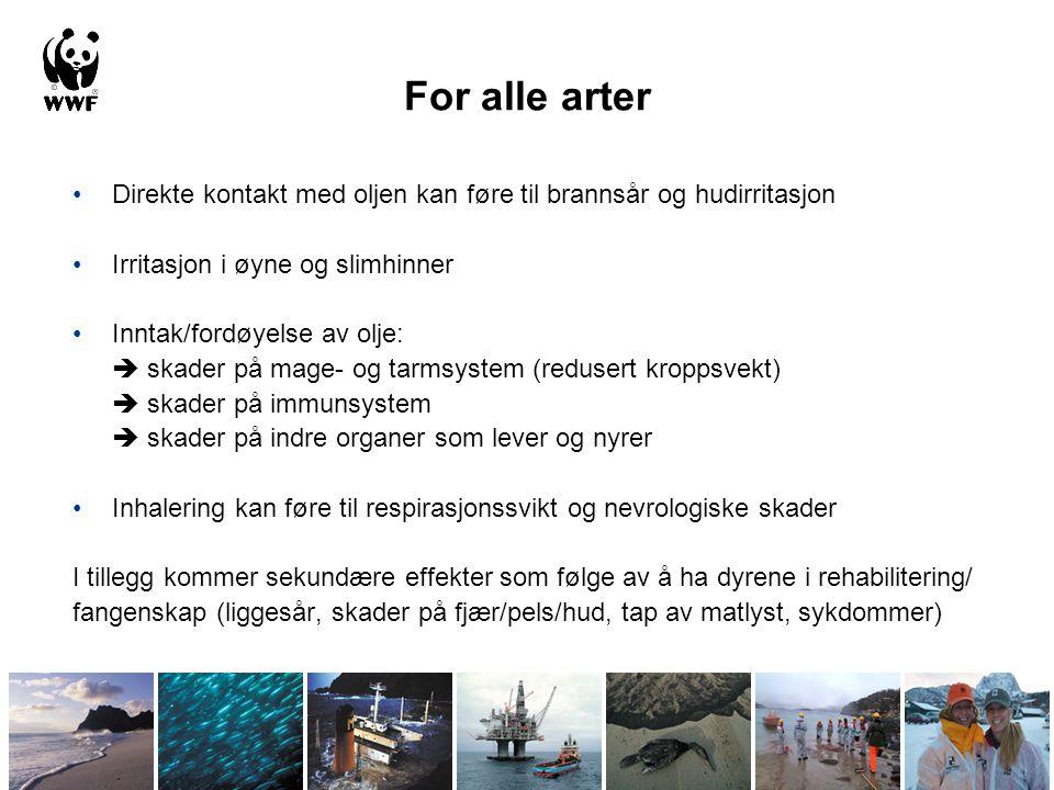 Bunnsamfunn Tareskog, korallrev og svampsamfunn Tareskogene langs kysten av Norge dekker flere tusen kvadratkilometer.
