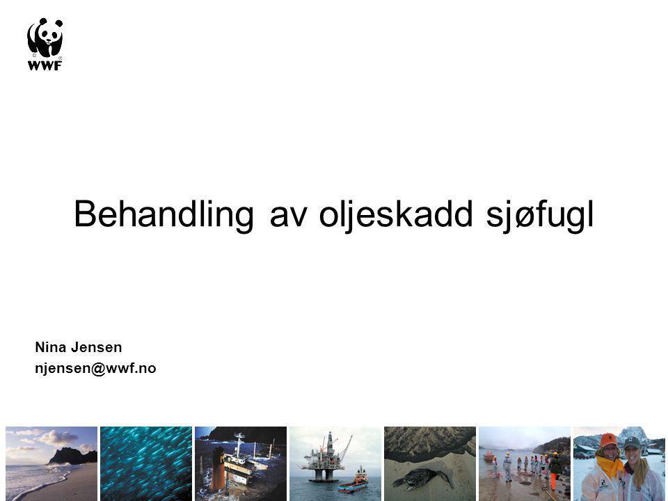 Behandling av oljeskadd sjøfugl Nina Jensen njensen@wwf.no