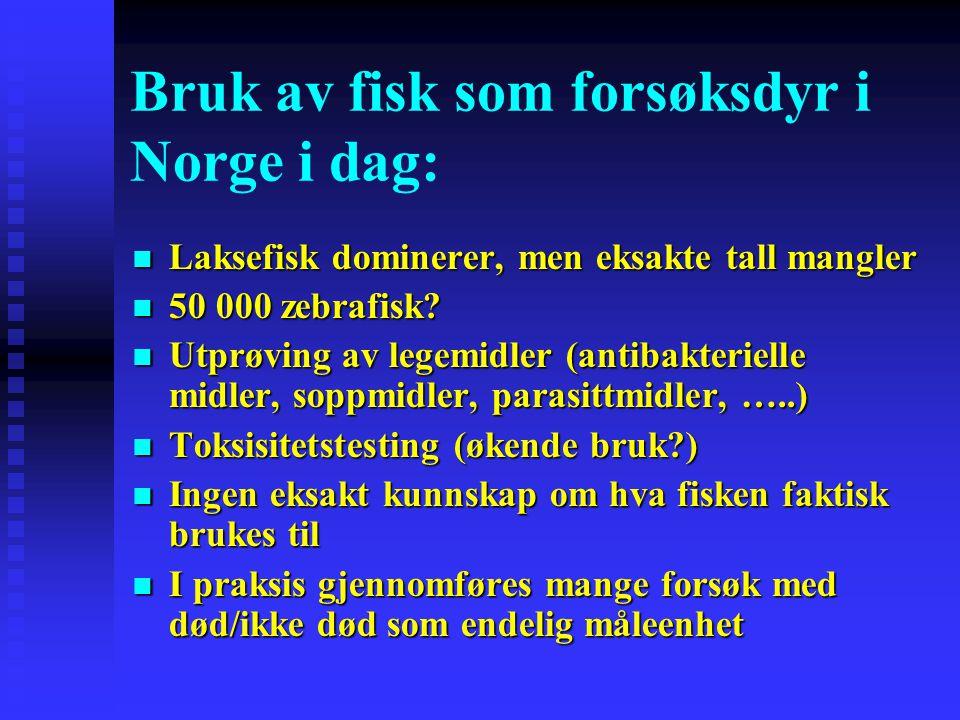 Bruk av fisk som forsøksdyr i Norge i dag: Laksefisk dominerer, men eksakte tall mangler Laksefisk dominerer, men eksakte tall mangler 50 000 zebrafis