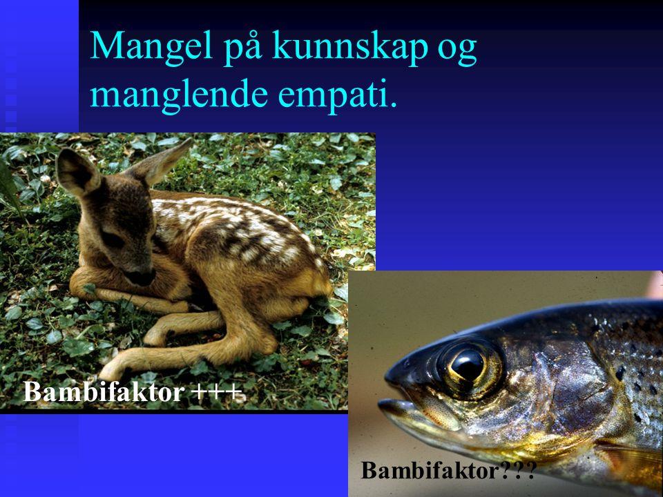 Mangel på kunnskap og manglende empati. Bambifaktor +++ Bambifaktor???