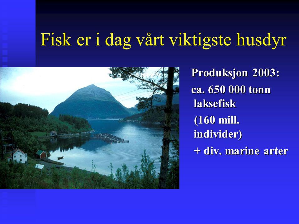 Fisk er i dag vårt viktigste husdyr Produksjon 2003: ca. 650 000 tonn laksefisk (160 mill. individer) + div. marine arter
