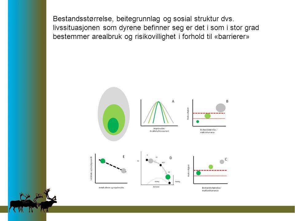 Bestandsstørrelse, beitegrunnlag og sosial struktur dvs. livssituasjonen som dyrene befinner seg er det i som i stor grad bestemmer arealbruk og risik