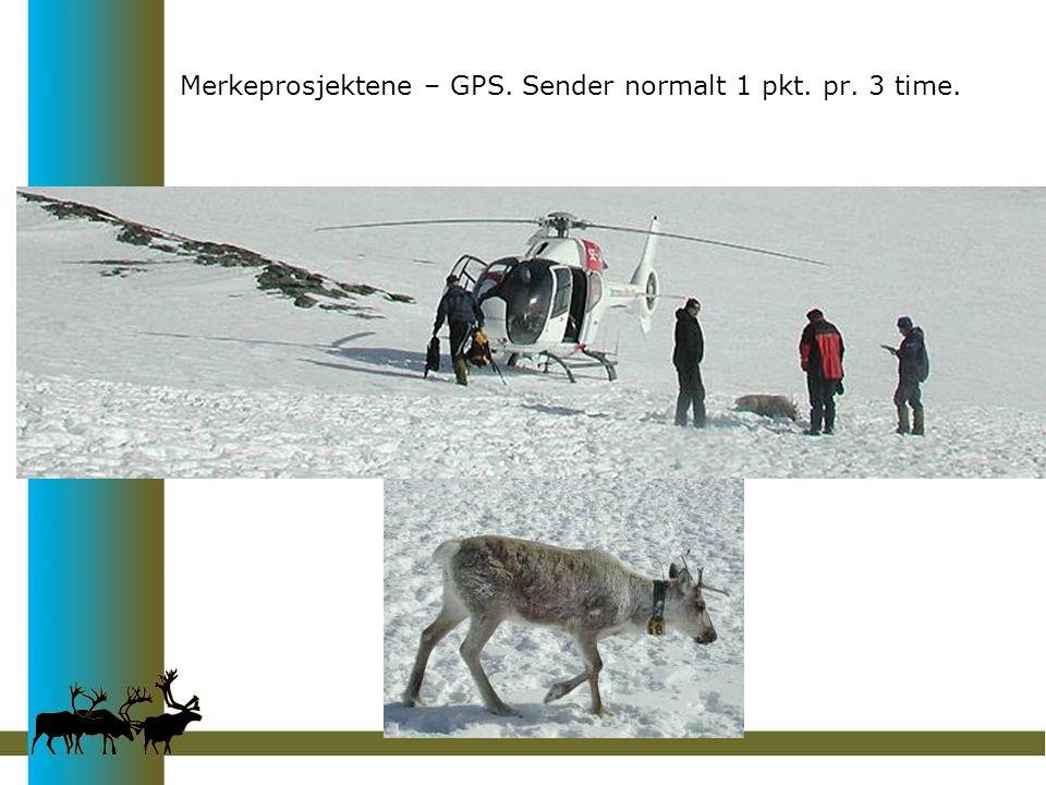 Merkeprosjektene – GPS. Sender normalt 1 pkt. pr. 3 time.