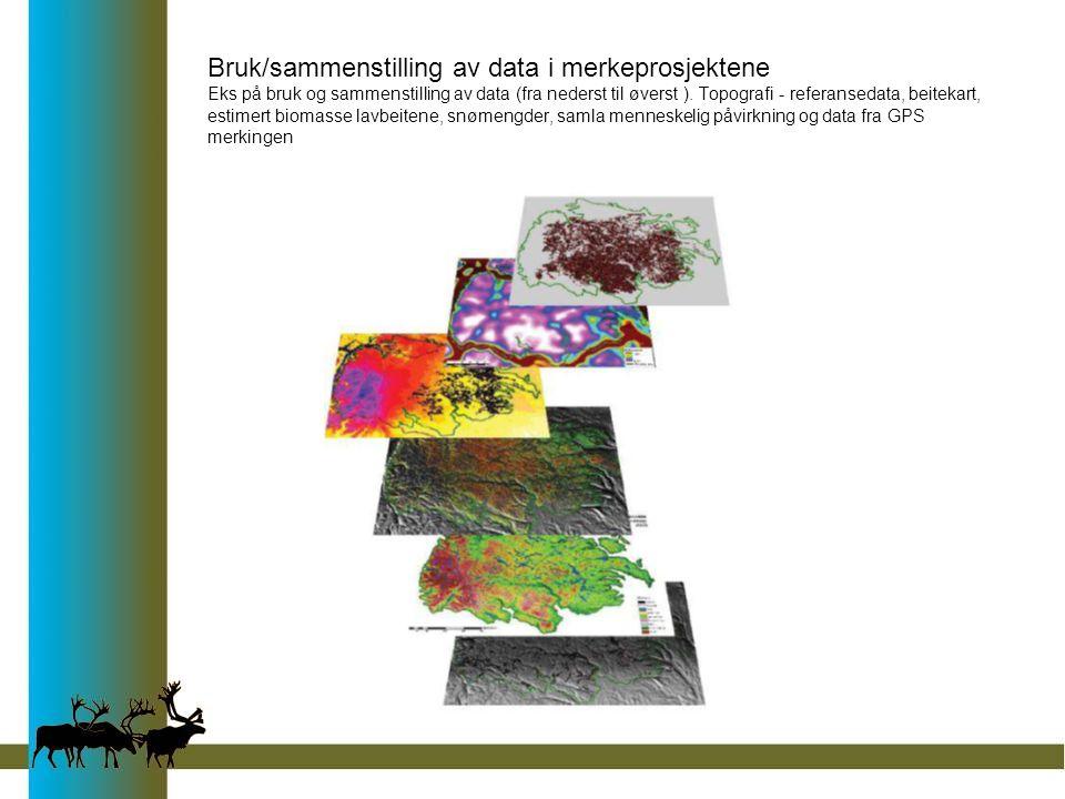 Bruk/sammenstilling av data i merkeprosjektene Eks på bruk og sammenstilling av data (fra nederst til øverst ). Topografi - referansedata, beitekart,