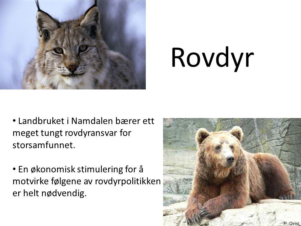 Rovdyr Landbruket i Namdalen bærer ett meget tungt rovdyransvar for storsamfunnet.