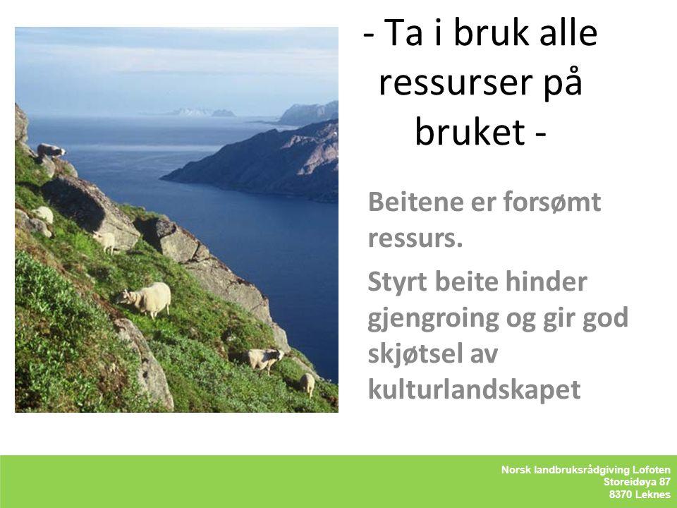- Ta i bruk alle ressurser på bruket - Kåre Holand– Lofoten Holandsveien 98 8370 Leknes Beitene er forsømt ressurs. Styrt beite hinder gjengroing og g