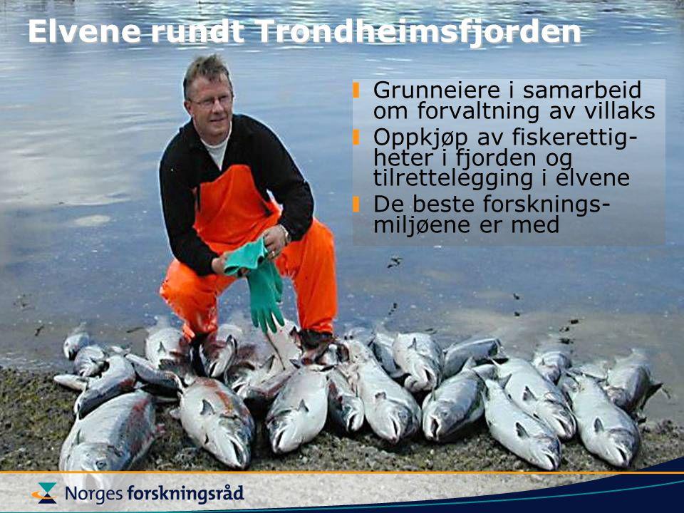 Elvene rundt Trondheimsfjorden Grunneiere i samarbeid om forvaltning av villaks Oppkjøp av fiskerettig- heter i fjorden og tilrettelegging i elvene De beste forsknings- miljøene er med