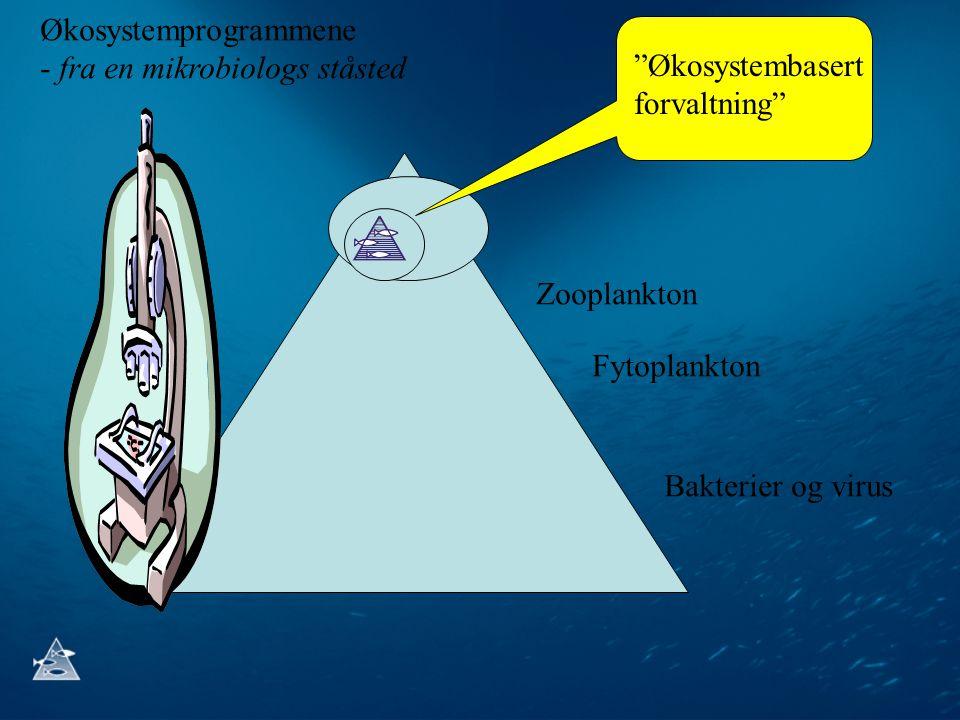 """Zooplankton Fytoplankton Bakterier og virus """"Økosystembasert forvaltning"""" Økosystemprogrammene - fra en mikrobiologs ståsted"""