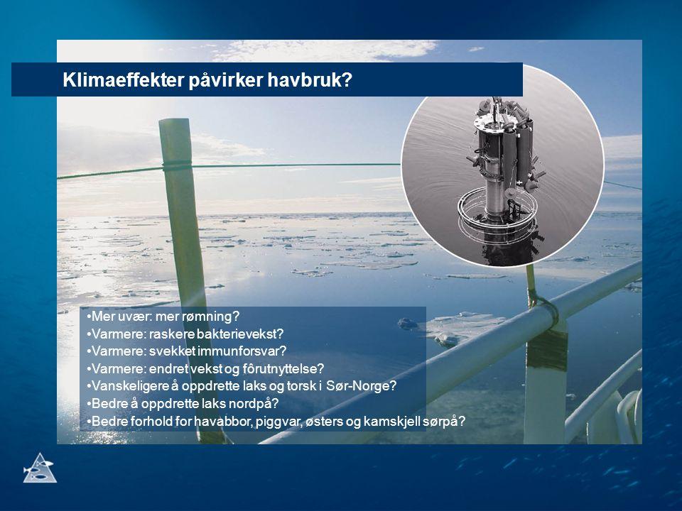 Klimaeffekter påvirker havbruk? Mer uvær: mer rømning? Varmere: raskere bakterievekst? Varmere: svekket immunforsvar? Varmere: endret vekst og fôrutny
