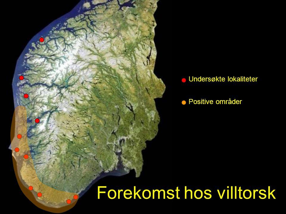 Forekomst hos villtorsk Undersøkte lokaliteter Positive områder
