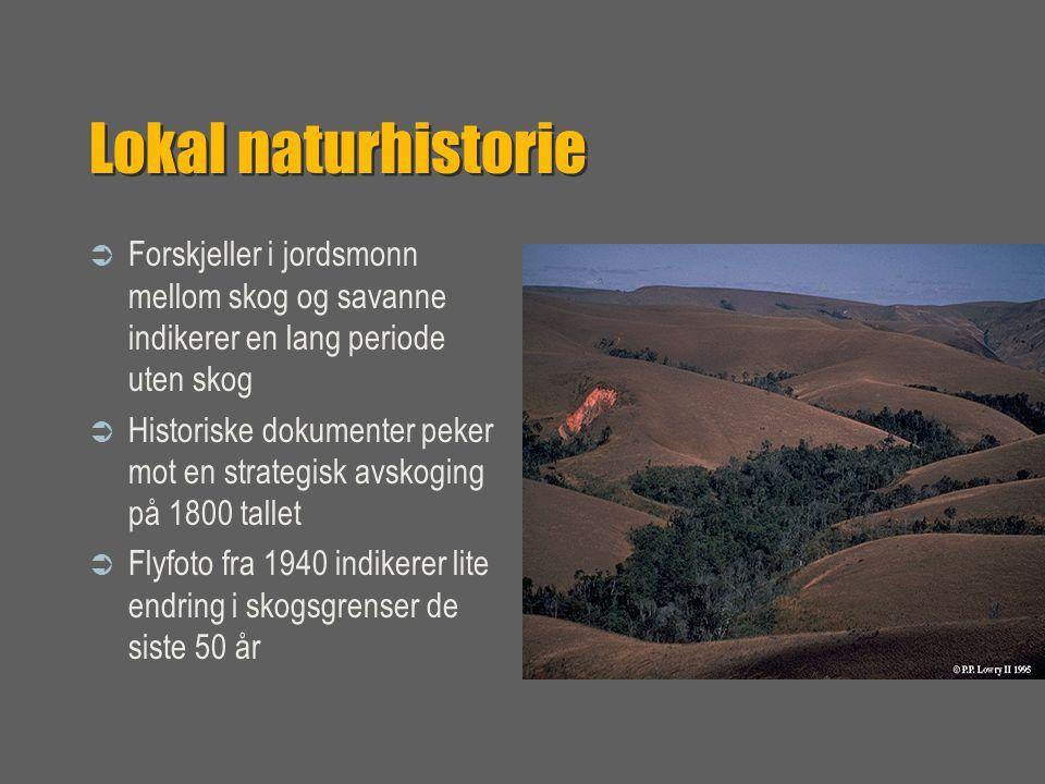 Lokal naturhistorie  Forskjeller i jordsmonn mellom skog og savanne indikerer en lang periode uten skog  Historiske dokumenter peker mot en strategisk avskoging på 1800 tallet  Flyfoto fra 1940 indikerer lite endring i skogsgrenser de siste 50 år