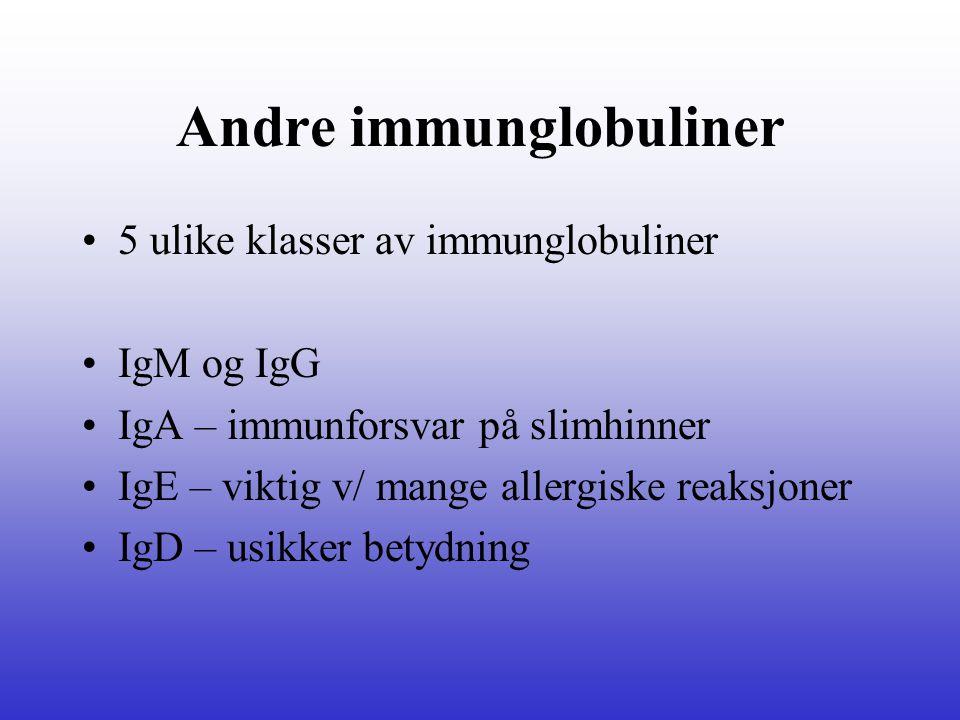 Andre immunglobuliner 5 ulike klasser av immunglobuliner IgM og IgG IgA – immunforsvar på slimhinner IgE – viktig v/ mange allergiske reaksjoner IgD –