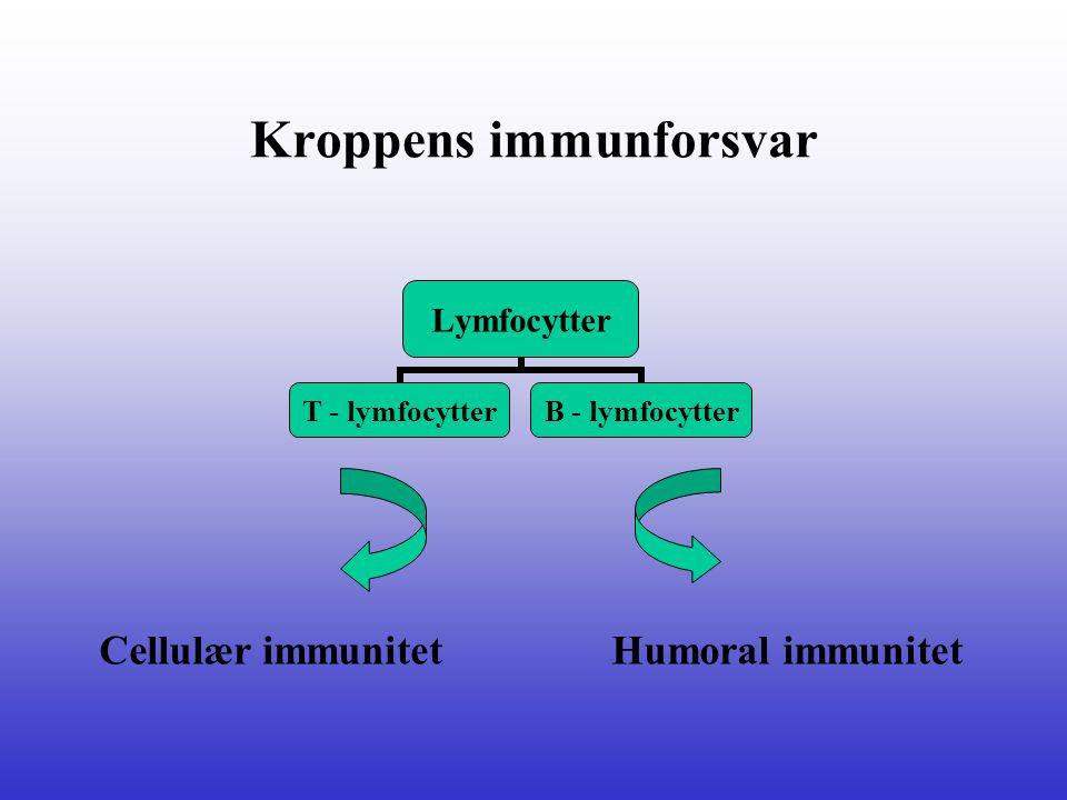 Kroppens immunforsvar Lymfocytter T - lymfocytter B - lymfocytter Cellulær immunitetHumoral immunitet