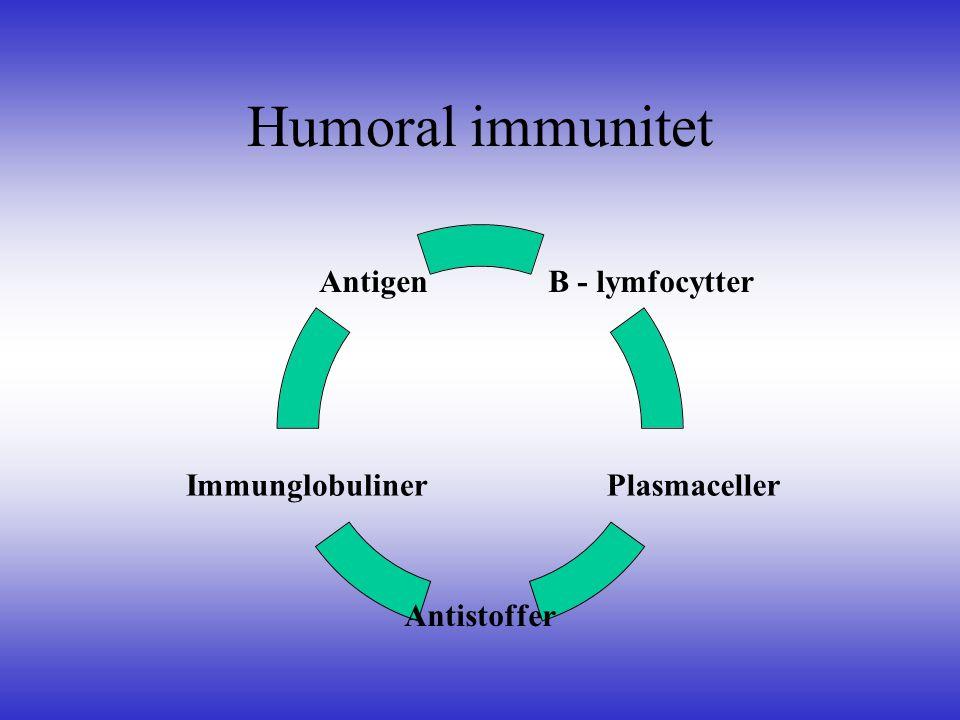 Humoral immunitet B - lymfocytter Plasmaceller Antistoffer Immunglobuliner Antigen
