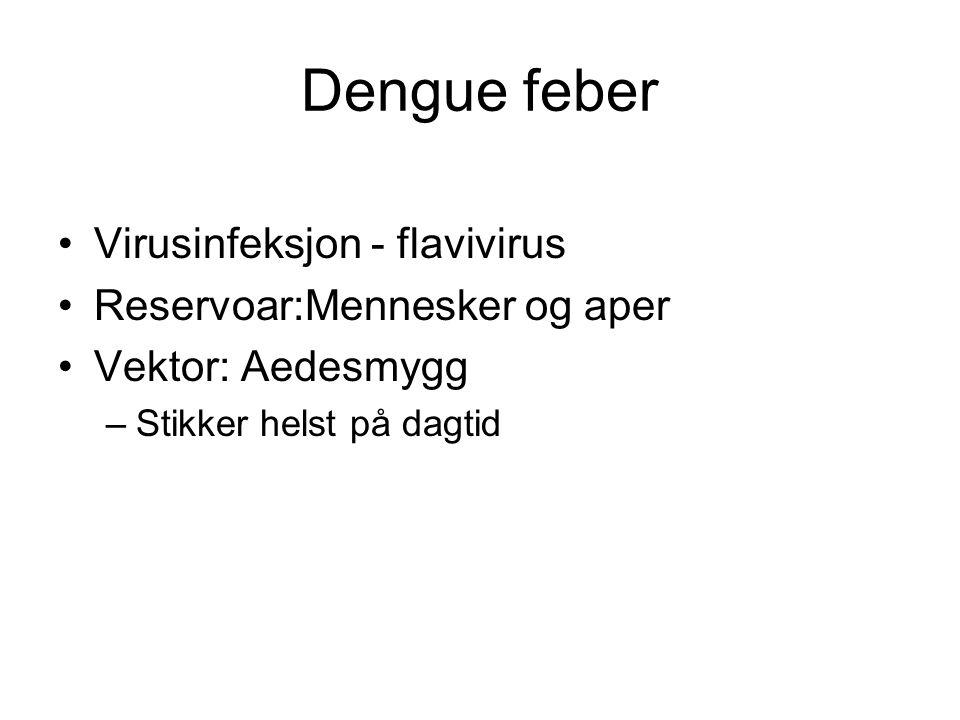 Dengue feber Virusinfeksjon - flavivirus Reservoar:Mennesker og aper Vektor: Aedesmygg –Stikker helst på dagtid