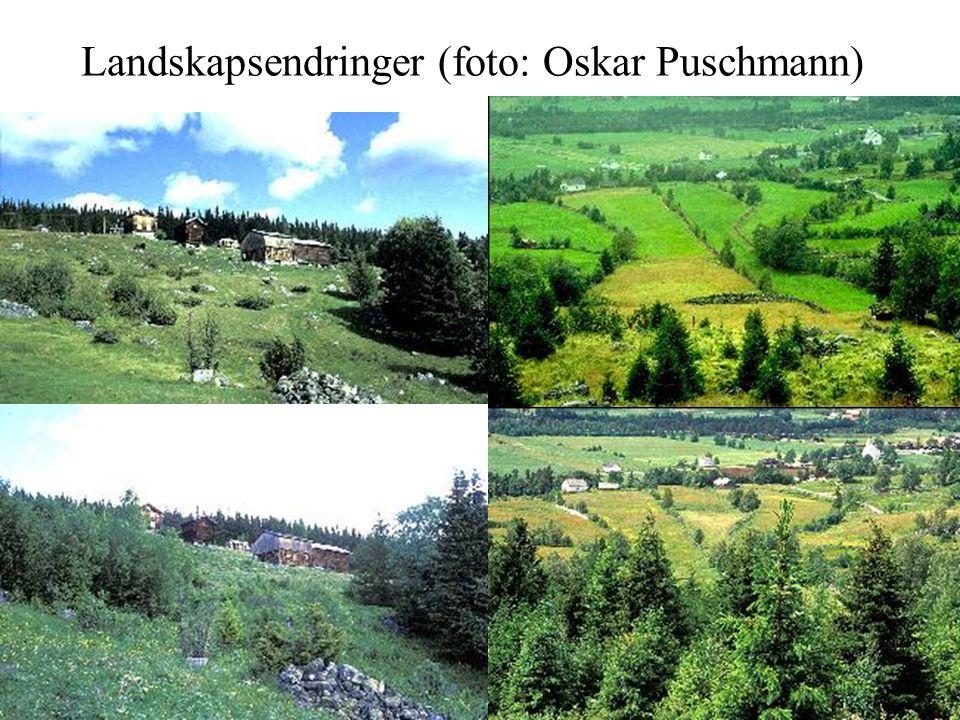 Landskapsendringer (foto: Oskar Puschmann)