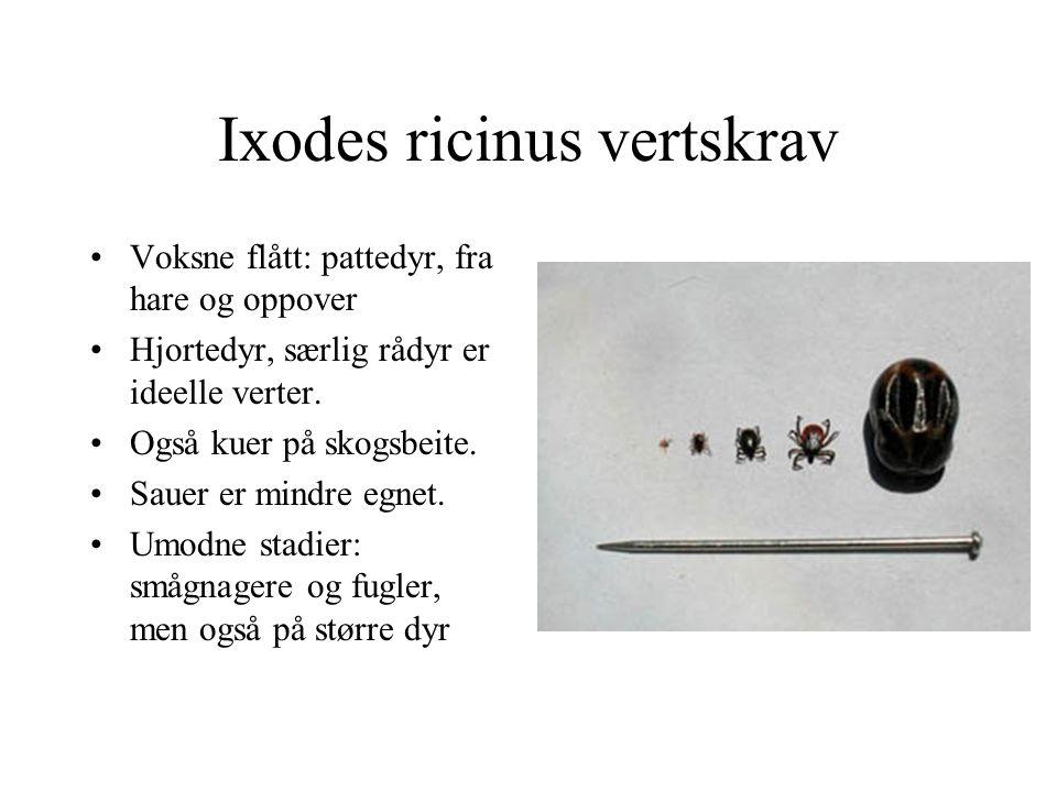 Ixodes ricinus vertskrav Voksne flått: pattedyr, fra hare og oppover Hjortedyr, særlig rådyr er ideelle verter. Også kuer på skogsbeite. Sauer er mind