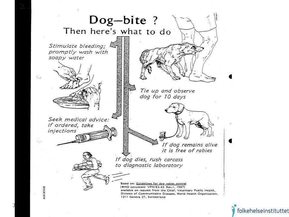 37 Dog bite